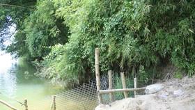 Sông Vệ ăn sâu uy hiếp khu dân cư của 36 hộ .Ảnh:Nguyễn Trang