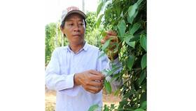 Tăng cường định vị  thương hiệu thực phẩm Việt