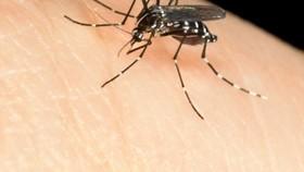 Virus Tây sông Nile bùng phát tại Italy, Hy Lạp