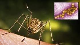 Virus nguy hiểm tái xuất ở châu Âu