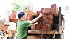 Vận chuyển gỗ trái phép bị phạt 200 triệu đồng
