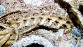 Phát hiện hóa thạch hươu thời tiền sử