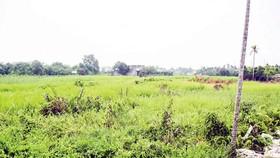Hàng trăm ha đất tại Hóc Môn thuộc dự án An Phú Hưng vừa thoát treo, trả lại quyền lợi cho người dân.