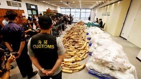 Hải quan Hồng Công ngày 6-7-2017 họp báo công bố phát hiện vụ buôn lậu ngà voi lớn nhất 30 năm qua. Ảnh: REUTERS