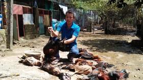 Sự cố xảy ra khiến các con vật nuôi của nhà anh Nguyễn Tấn Tài bị chết