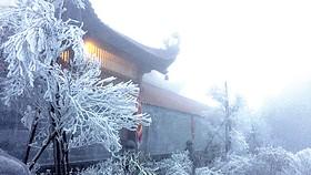 Băng giá phủ trắng đỉnh Fansipan sáng 7-4. Ảnh: TTXVN