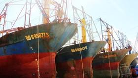 Bộ NN-PTNT báo cáo thực trạng tàu cá đóng theo Nghị định 67 nằm bờ hàng loạt