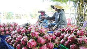 Cần chế biến sâu nông sản Việt