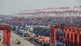 Container tập kết ở cảng nước sâu Dương Sơn ở TP Thượng Hải. Ảnh: Reuters