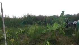 Một khu đất của người dân nằm trong dự án KCN Phong Phú  chưa được nhận tiền đền bù, đang là bãi cỏ hoang