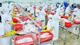 Chế biến thủy sản tại một doanh nghiệp xuất khẩu vào thị trường Mỹ. Ảnh: CAO THĂNG