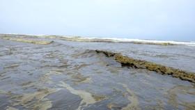 Nước biển Quảng Ngãi đổi màu là do tảo Silic