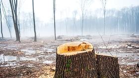 Nạn chặt phá rừng cũng là nguyên nhân khiến đất đai bị ảnh hưởng nặng
