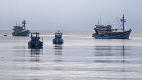 Phạt 4 tàu cá đánh bắt trái phép 3,6 tỷ đồng