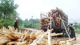 Miền Trung: Rừng mất, đất cằn - Bài 1: Muôn kiểu phá rừng
