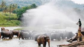 Cấm đồ nhựa để bảo vệ động vật hoang dã
