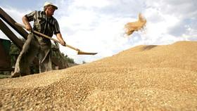Gỡ khó cho doanh nghiệp nhập nông sản từ Hoa Kỳ