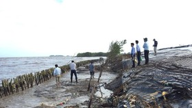 Đê biển Tây Cà Mau bị sạt lở nghiêm trọng