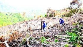 Từ tháng 7 đến tháng 8-2020, nhiều người ở xã Phú Mỡ đã chặt hạ, phát trắng cây rừng, lấn chiếm đất lâm nghiệp trái phép ở 6 tiểu khu thuộc sơn phận của xã Phú Mỡ