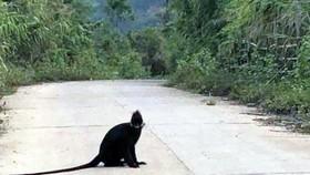 Bàn giao cá thể voọc Lào cho trung tâm cứu hộ linh trưởng