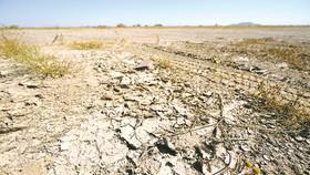 Hạn hán do thiếu mưa ở Maricopa, bang Arizona (Mỹ)