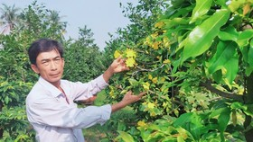 Anh Lê Đức Trọng (Thuận An, Bình Dương) với kinh nghiệm 20 năm trồng mai đang chuẩn bị cho vụ tết