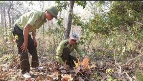 Tây Nguyên khẩn cấp phòng chống cháy rừng