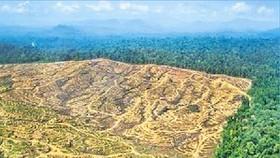 Diện tích rừng rộng lớn bị tàn phá trên đảo Borneo