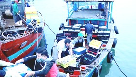 Lao động đi biển tại âu thuyền Cửa Sót, huyện Lộc Hà (Hà Tĩnh). Ảnh: DƯƠNG QUANG
