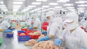DOC tiếp tục rà soát thuế chống bán phá giá đối với cá tra, cá basa nhập khẩu từ Việt Nam