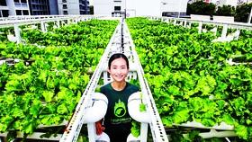 Một nông trại trên mái tòa nhà để xe ở Singapore