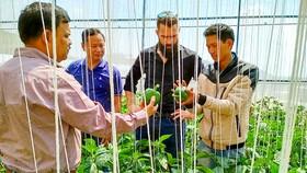 Một mô hình phát triển nông nghiệp sạch tại Đà Lạt. Ảnh: Huy Anh