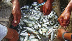 Quy hoạch bảo vệ và khai thác nguồn lợi thủy sản