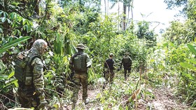 Rừng Amazon đang chịu thảm họa kép: phá rừng và dịch bệnh