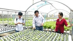 Thúc đẩy kết nối sản xuất - tiêu thụ nông sản: Cần thống nhất cơ chế quản lý theo vùng