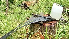 """Xem xét trách nhiệm của kiểm lâm trong vụ """"xẻ thịt"""" hơn 100m³ gỗ ở Gia Lai"""