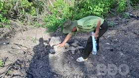 Cán bộ kiểm lâm đo thân cây bị chặt phá tại khu vực rừng thuộc tiểu khu 235. Ảnh: BĐO