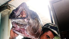 Việt Nam nỗ lực chống đánh bắt cá bất hợp pháp