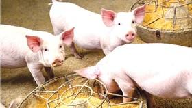 Sản xuất và vận chuyển thức ăn cho ngành chăn nuôi cũng làm tăng lượng khí thải CO2