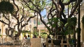 Về việc cổ phần hóa Saigontourist: Lập ngay hồ sơ bảo tồn cho 4 khách sạn