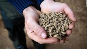 Thức ăn gia súc giúp giảm khí thải