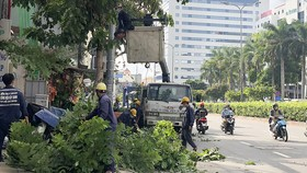 Nhân viên Công ty TNHH MTV Công viên Cây xanh TPHCM đang cắt tỉa cây trên đường Cộng Hòa (quận Tân Bình)
