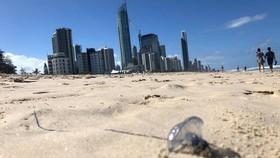 Sứa bluebottle trên bãi biển Surfers Paradise ở bang Queensland, Úc. Ảnh: SBS