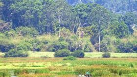 Xử lý nghiêm vi phạm về bảo vệ môi trường