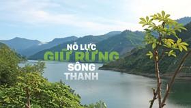 Nỗ lực giữ rừng Sông Thanh