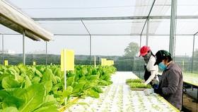 Đưa cán bộ trẻ về 7 hợp tác xã nông nghiệp