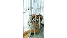 Làm phim ngắn về bảo vệ động vật hoang dã