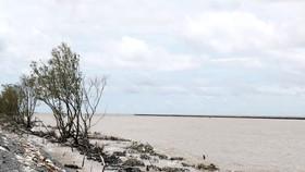 Đồng bằng sông Cửu Long: Khẩn cấp cứu đê biển bị sạt lở