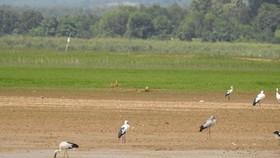 Chưa di dời dân ra khỏi Khu bảo tồn thiên nhiên - văn hóa Đồng Nai