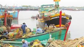 Bình Định điều tra nguồn lợi thủy sản ven biển